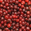 Red cowberry — Stock Photo