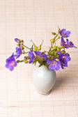 Wild flowers in a vase — Stock Photo