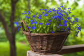 Basket with flowers on a rail — Stock Photo