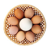 Goose egg and egg — Stock Photo