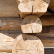Wood crossection — Stock Photo