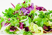 Various salad leaves — Stock Photo