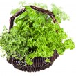 Basket of herbs — Stock Photo