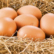 Fresh eggs in hay — Stock Photo