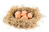 Fresh eggs in hay — Stock Photo