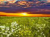 Green fields at dawn — Stockfoto
