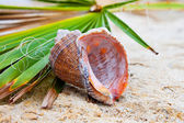 Seashell on green leaf — Stock Photo