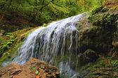 Små vattenfall och röda bär på stenen — Stockfoto