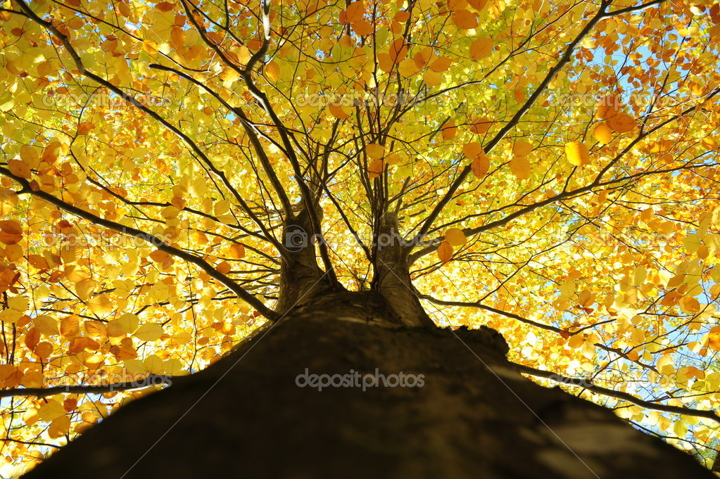 Tree in autumn — Stock Photo #4142288