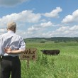 Lonely herdsman — Stock Photo