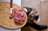 Cat steals forcemeat — Stock Photo