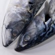 Two mackerels — Stock Photo