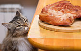Cat looking at piece of meat from the kitchen table — Stock Photo