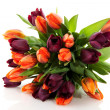 Stock Photo: Maroon and orange tulips