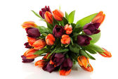 Maroon and orange tulips — Stock Photo