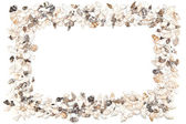 Shell frame on a white background — Stock Photo
