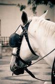 在布拉格的马 — 图库照片