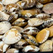 Shellfish — Stock Photo #4041838