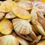 Shellfish — Stock Photo
