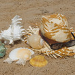 Shellfish on the beach — Stock Photo #4044371