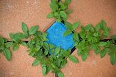 Hoja verde en vereda — Foto de Stock