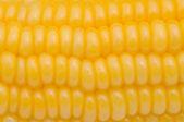 Corn seeds — Stock Photo