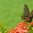 Stock Photo: Butterflie on flowers