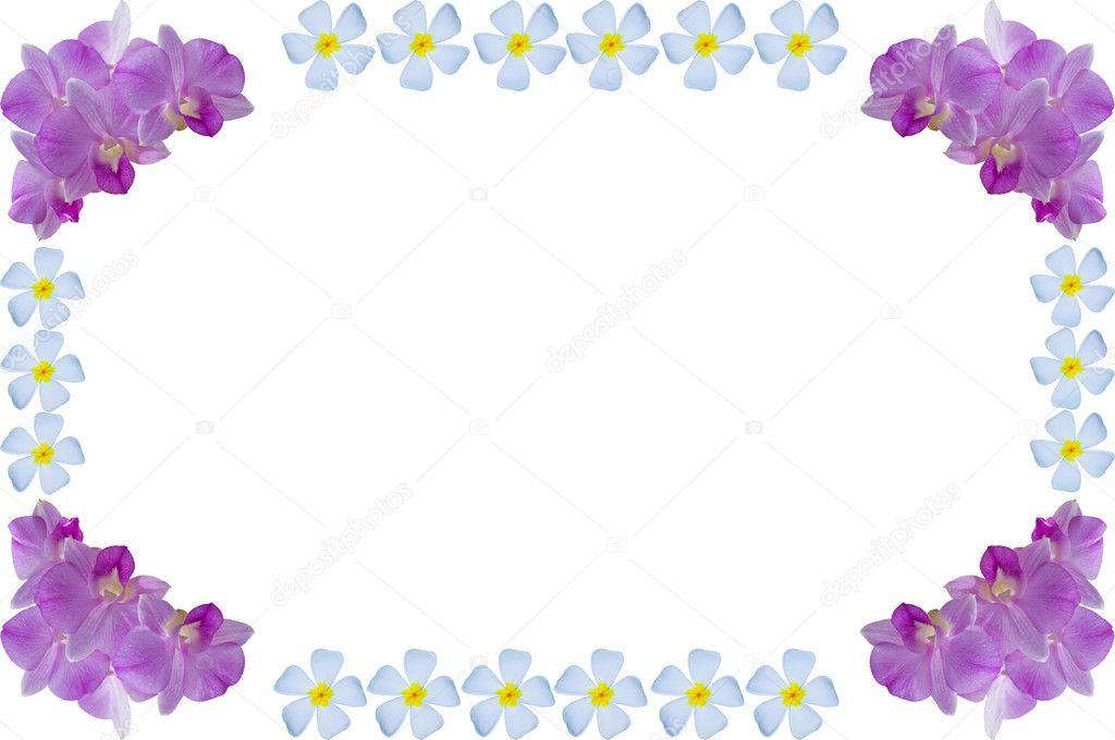 Flower frame (purple orchid and temple flower) - Stock Image