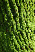 The green moss — Stock Photo