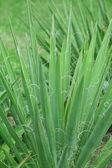 Primer plano de planta verde — Foto de Stock