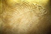 Obří ryby zkameněliny — Stock fotografie