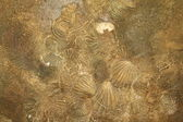 Shell sediment abstract background — Stock Photo