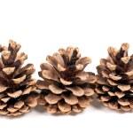 モミの木の 3 本の枝 — ストック写真