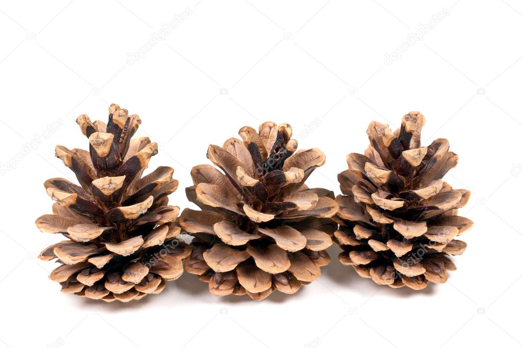 Three branch of fir-tree isolated on a white background — Foto Stock #5180477
