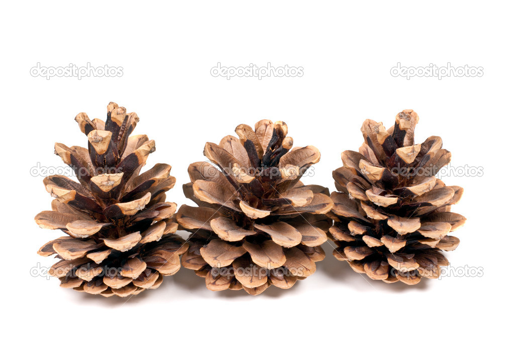 Three branch of fir-tree isolated on a white background — Foto de Stock   #5180477