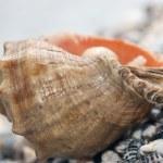 Shell on beach — Stock Photo