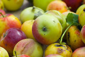 Cropping of apples — Stock Photo