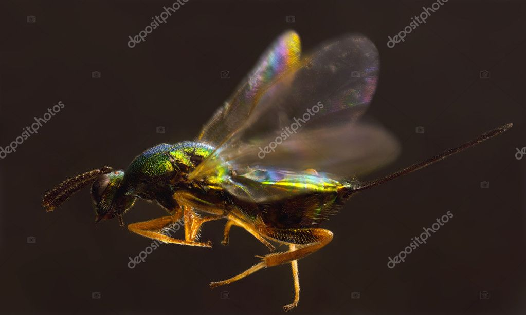 Extreme close-up image of insect in flight — Stock Photo #4286445