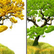 Golden tree and green tree - Stock Photo