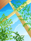 Plants at a window — Stock Photo