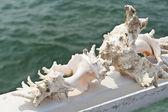 Broken sea shell — Stock Photo