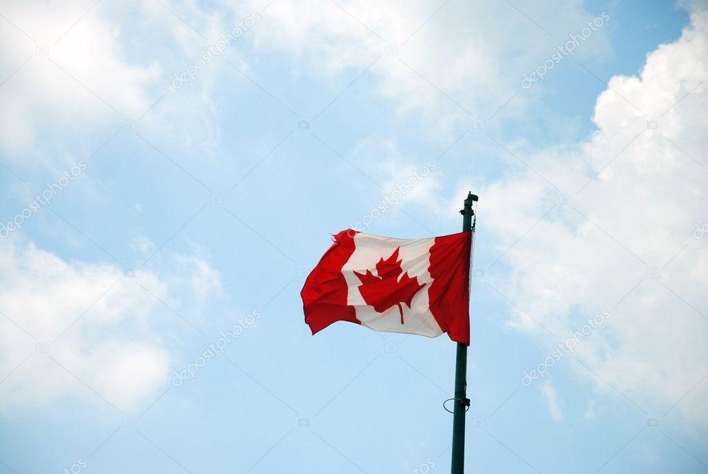 挥舞着加拿大国旗– 图库图片