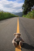 Road and bear — 图库照片