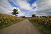 Road and farm — Stock Photo