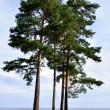 Lake Ladoga — Stock Photo