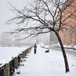 Stock Photo: Heavy snowfall in St. Petersburg, lone mwalking with dog
