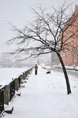 Heavy snowfall in St. Petersburg, a lone man walking with a dog — Stock Photo