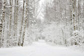 Winter Park, snowy path through the trees — Stock Photo