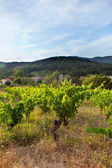Hill With Vineyard In France — Stock Photo