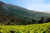 Mountain landscape In southeast France — Stock Photo